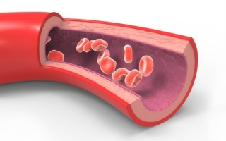 What should you know about cholesterol in the body?